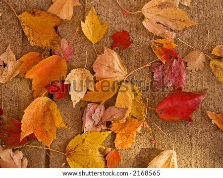 A close-up of some colorful fallen leaves on a sidewalk.
