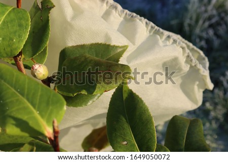 A close up of some leaves and some fleece material used for plant protection