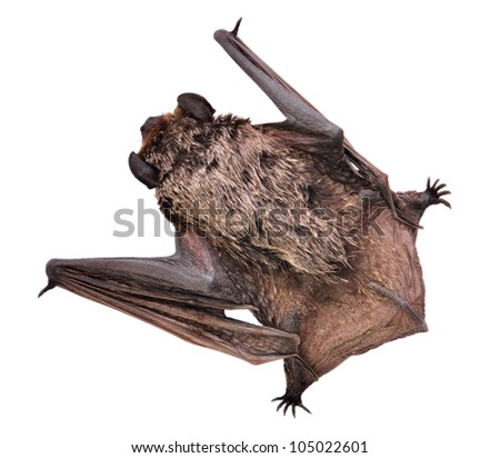 A close up of the  bat. Isolated on white.