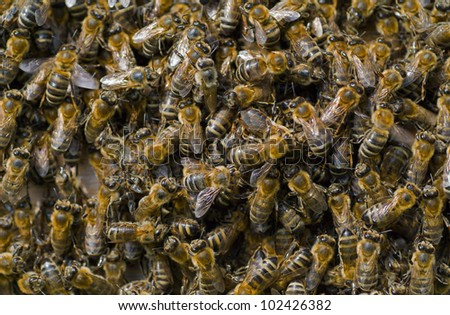 A close up of the bees in hive.