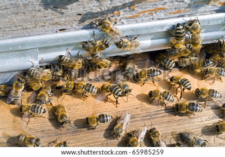 A close up of the bees on hive at hole.
