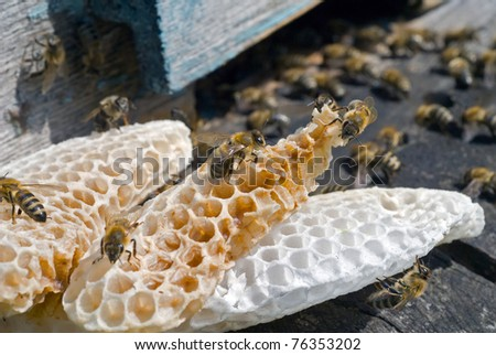 A close up of the bees on honeycomb on hive at hole.
