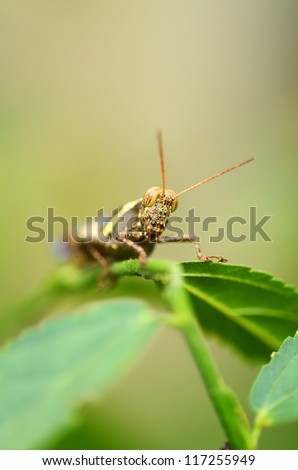 A close up of the grasshopper on branch