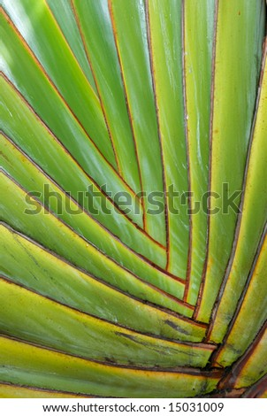 A close up of the interconnecting fronds of a tropical palm tree