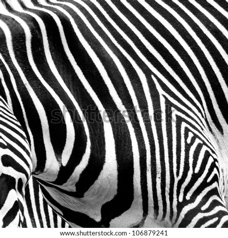 A close-up of the stripes of a zebra.