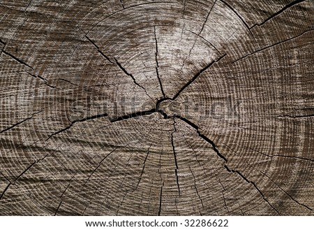 A close up of the surface of old cut of tree.