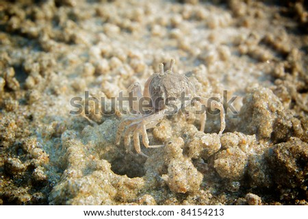 A close up of tiny sand crab camouflage on the beach