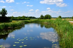 A close up on a vast river or lake with some water lillies and lilly pads floating in it seen next to a vast field, meadow, or pastureland and a coast covered with reeds seen on a sunny day in Poland