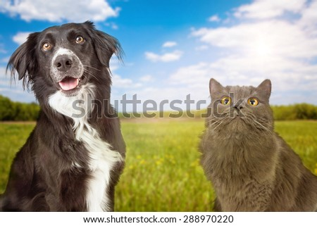 A close-up photo of a happy young dog and cat with a green grass field and blue sky in the background