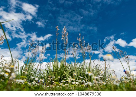 A close up photo of beautiful field with blooming flowers on a colorful day at spring