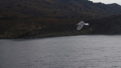 A close-up photo of seagull flying near an island ferry.