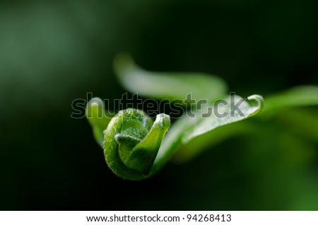 A close up photograph of the tip of a curled up green leaf.