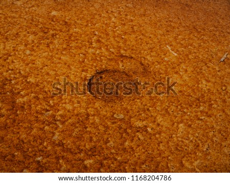 A close-up picture of a bison hoof print in Grand Prismatic Spring in Yellowstone National Park.