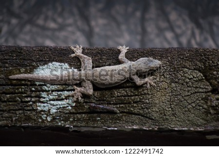 a close up picture of endemic home lizard camouflaging on the top of wooden plank