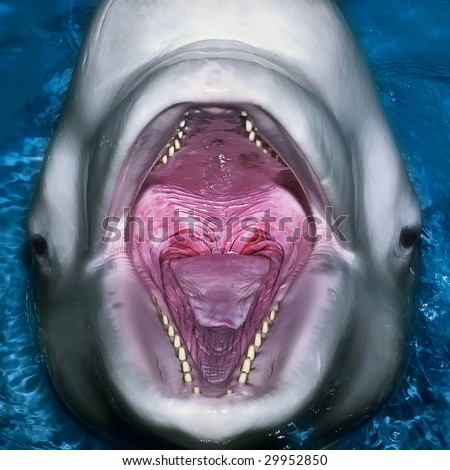 A close up portrait of dolphin with an open mouth