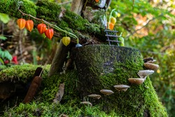 A close up selective focus view of a whimsical miniature fairy town on a moss covered tree stump in a forest, mushroom stepping stones and colorful decor