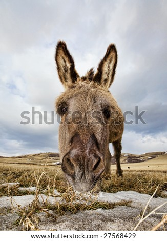 A close-up shot of a donkeys face with some snow patches