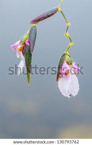 A close up shot  of a  flower hanging over the water. / Hanging Around