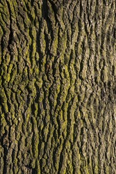 A close-up shot of tree bark.
