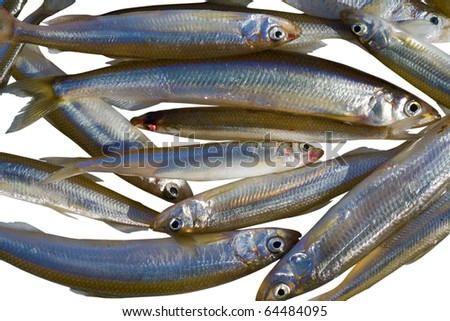 A close up the fishes (smelt). Winter. Isolated on white.