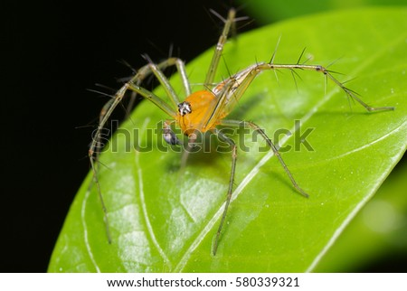A Close Up VIew Of A Beautiful Yellow Spider On Leaf With Blurry Background #580339321
