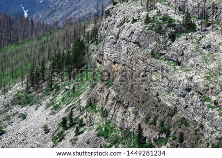 A closer look at a mountain slope detailing the tall coniferous trees, the green ground cover and the textured rock on the slopes.  #1449281234