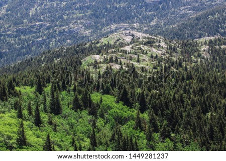 A closer look at a mountain slope detailing the tall coniferous trees, the green ground cover and the textured rock on the slopes.  #1449281237