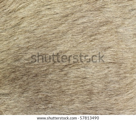 A closeup image of kangaroo fur. Great for texture, background or wallpaper.