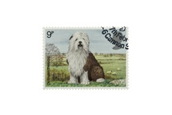 A Closeup Macro photograph isolated on a white background of a used British 9p commemorative stamp featuring an Old English Sheepdog issued in 1979 by the British Postal Service