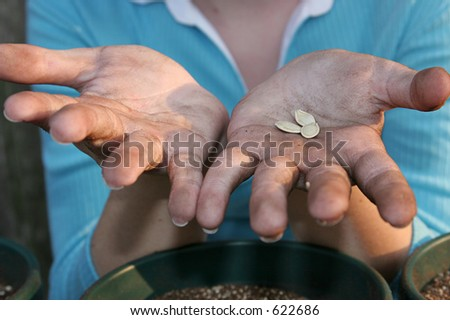 A closeup of a child's hands covered with potting soil and holding squash seeds she is about to plant.