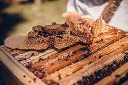A closeup of a freshly harvested beeswax with dead bees on a wooden beehive box