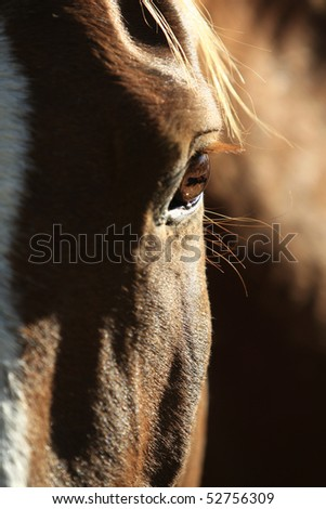 A closeup of a horse's face with dramatic sidelight showing the eye