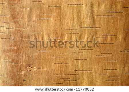 A closeup of birch bark for use as a background.