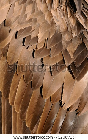 A closeup of brown feathers of a vulture