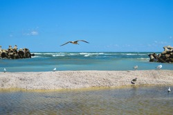 A closeup of gulls flying and resting on the pebble beach, blue skyscape and waterscape on the background