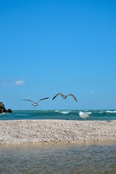 A closeup of gulls flying over the pebble beach, blue skyscape and waterscape on the background