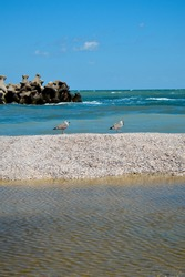 A closeup of gulls resting on the pebble beach, blue skyscape and waterscape on the background