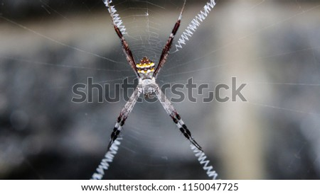 A closeup of orbs weaver spider  #1150047725