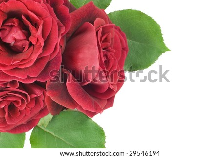 A closeup of three deep red roses with leaves isolated on white background with copy space, great for Mother's Day or Valentine's Day