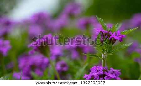 A closeup of tiny spring wildflowers with with a fabulous depth of field.