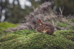 A closeup shot of a brown rabbit sitting on a stone with cuff plants
