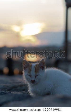 A closeup shot of a cat with sunset in the background