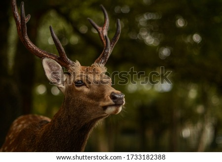 A closeup shot of a deer in Nara Park, Japan