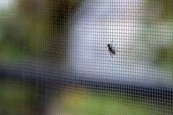 A closeup shot of a fly on the window net