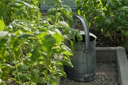 A closeup shot of a metal pail in the agricultural garden