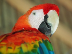 A closeup shot of a parrot with colorful feathers on a blurred background