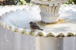 A closeup shot of a small sparrow in a water fountain