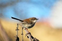 A closeup shot of finches bird perched on a tree branch finch on twig