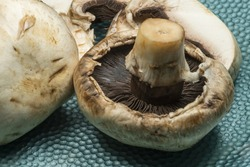 A closeup shot of mushrooms on green spotty background