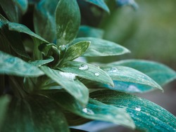 A closeup shot of the green plant with waterdrops on the leaves in the park